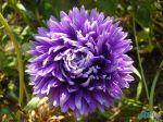 flowers_249