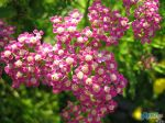 flowers_255