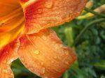 flowers_256