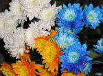 flowers_257