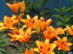 flowers_258