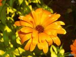 flowers_260