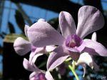 flowers_266