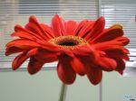 flowers_390