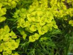 flowers_395