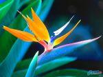 flowers_398