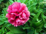 flowers_399