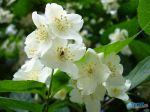 flowers_400