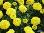 flowers_401