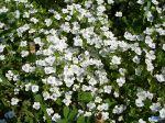 flowers_402