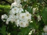 flowers_404