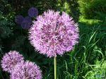 flowers_405