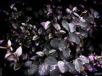 Leaves_2048x1536.jpg