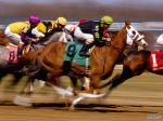 Thoroughbred Horse Racing, Turfway Park, Kentucky.jpg