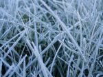 00436_frostedgrass_2560x1600