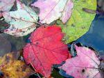 00514_autumnleaves_2560x1600