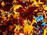 Autumn_leaves-1080x1920