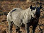 Black_Rhino-1080x1920