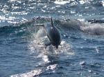 Bottlenose_dolphin-1080x1920