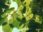 Leaves_1080x1920