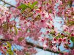 Spring_1080x1920