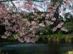 Spring_festival_1080x1920