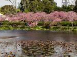 Spring_view_1080x1920