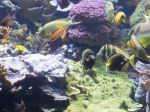 Some of the fish at the Shedd Aquarium in Chicago.